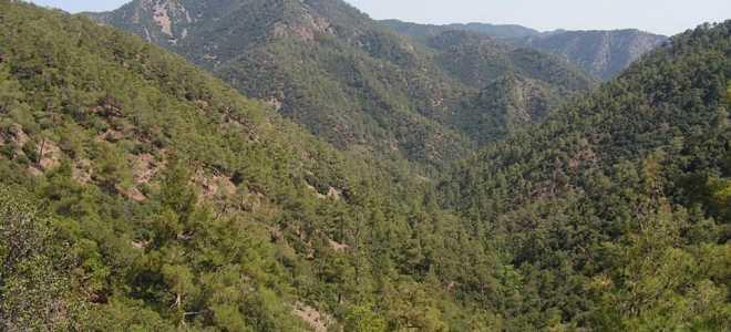 Самая высокая точка гор Троодос на Кипре – гора Олимбос (Олимп)
