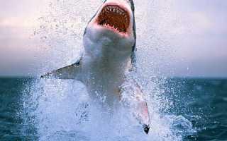 Есть ли на Кипре акулы?