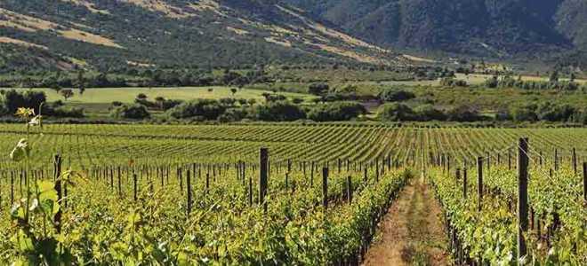 Знаменитые винодельни Кипра