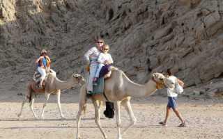 Парк верблюдов в Ларнаке