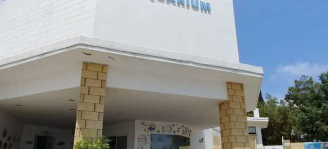 Особенности посещения океанариума в Протарасе