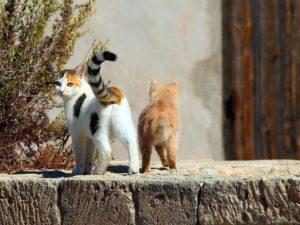 Мама с котенком