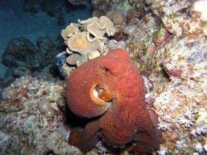 Риф осьминогов