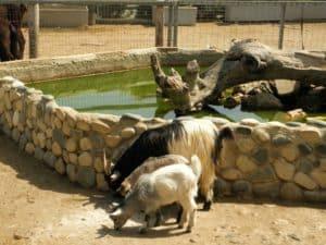 Мини зоопарк и его обитатели