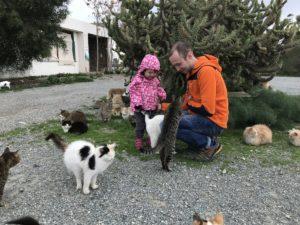 Желательно взять корм для бездомных котят, которых приютили на территории храма