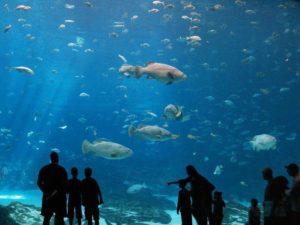 Океанариум в Протарасе