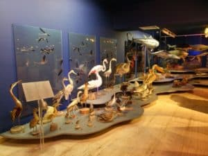 Музей моря Талласа