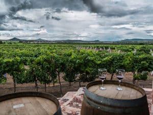 Занимаются виноделием более 6000 лет