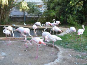 В зоопарке поселилось много птиц