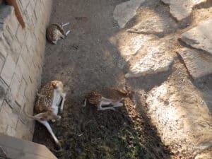 У входа в зоопарк посетителей встречает олененок