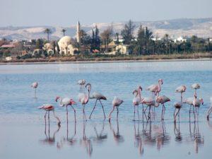 Фламинго на Соленом озере