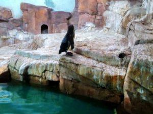 Обитель пингвинов
